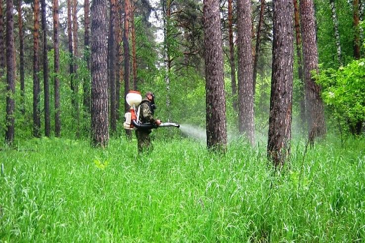 Обработка от клещей лесных массивов в Севастополе